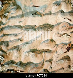 Das Waldland TX USA - 10-30-2018 - Sand in trockenen Stream - Stockfoto