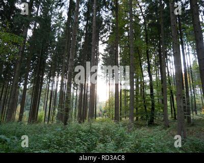 Bild des mystischen Sonne in den Wald während des Morgens - Stockfoto