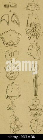 . Eine Lektüre in die Entomologie: oder der Naturgeschichte der Insecten. Entomologie. Ich'l i:. Bitte beachten Sie, dass diese Bilder sind von der gescannten Seite Bilder, die digital für die Lesbarkeit verbessert haben mögen - Färbung und Aussehen dieser Abbildungen können nicht perfekt dem Original ähneln. extrahiert. Kirby, William, 1759-1850; Spence, William, 1783-1860; Metcalf Sammlung (North Carolina State University). NCRS; Tippmann Sammlung (North Carolina State University). NCRS. Stuttgart: Cottaischen Buchhandlung - Stockfoto