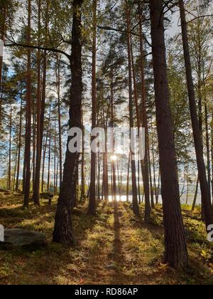 Bild des mystischen Sonne in den Wald mit den Schatten der Bäume während der Morgenstunden - Stockfoto