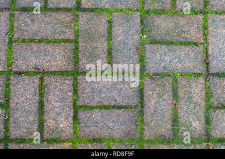 Weg Steine in einem Muster mit Moos wächst. - Stockfoto