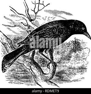 . Die Vögel von Illinois und Wisconsin. Vögel Vögel. Ich 88 Field Museum of Natural History - Zoologie, Vol. IX. Bitte beachten Sie, dass diese Bilder sind von der gescannten Seite Bilder, die digital für die Lesbarkeit verbessert haben mögen - Färbung und Aussehen dieser Abbildungen können nicht perfekt dem Original ähneln. extrahiert. Cory, Charles B. (Charles Barney), 1857-1921. Chicago - Stockfoto