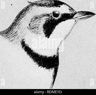 . Die Vögel von Illinois und Wisconsin. Vögel, Vögel. Horned Lark.. Bitte beachten Sie, dass diese Bilder sind von der gescannten Seite Bilder, die digital für die Lesbarkeit verbessert haben mögen - Färbung und Aussehen dieser Abbildungen können nicht perfekt dem Original ähneln. extrahiert. Cory, Charles B. (Charles Barney), 1857-1921. Chicago - Stockfoto