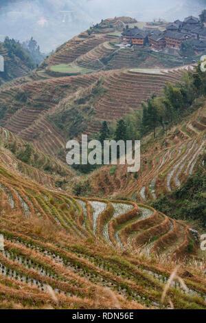 Reisterrassen auf dem hohen Berg Hängen des Longshen, Chinas Aufstieg bis Stadt zu erfüllen - Stockfoto