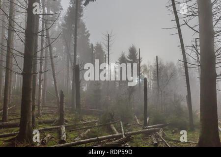 Bild der Bäume ohne Blätter, Stämme und Äste gefallen Nach einem grossen Sturm mit Dunst in der Mitte des Waldes in den Belgischen Ardennen - Stockfoto