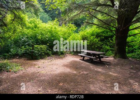 Picknick Tisch unter einem grossen Cypress Tree, Butano State Park, San Francisco Bay Area, Kalifornien - Stockfoto