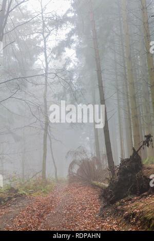 Erstaunliche Bild eines gefallenen Baum auf einem Pfad nach einem großen Sturm mit Dunst in der Mitte des Waldes an einem Wintertag in den Belgischen Ardennen - Stockfoto