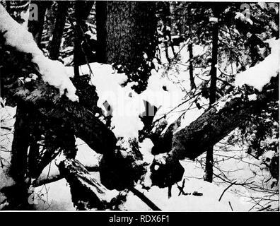. [Gesammelt Nachdrucke, 1912-1919. Säugetiere; Säugetiere, Vögel. Feb., 1912. Säugetiere von Illinois und Wisconsin - Cory. 167. Bitte beachten Sie, dass diese Bilder sind von der gescannten Seite Bilder, die digital für die Lesbarkeit verbessert haben mögen - Färbung und Aussehen dieser Abbildungen können nicht perfekt dem Original ähneln. extrahiert. Cory, Charles B. (Charles Barney), 1857-1921. , N. n. - Stockfoto