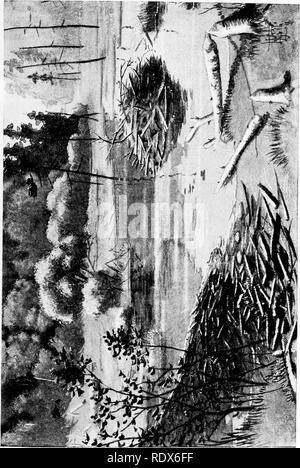 . [Gesammelt Nachdrucke, 1912-1919. Säugetiere; Säugetiere, Vögel. Feb., 1912. Säugetiere von Illinois und Wisconsin - Cory. 163. 2. Bitte beachten Sie, dass diese Bilder sind von der gescannten Seite Bilder, die digital für die Lesbarkeit verbessert haben mögen - Färbung und Aussehen dieser Abbildungen können nicht perfekt dem Original ähneln. extrahiert. Cory, Charles B. (Charles Barney), 1857-1921. , N. n. - Stockfoto