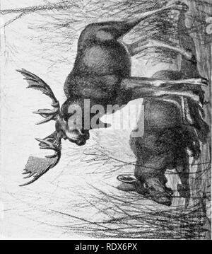 . [Gesammelt Nachdrucke, 1912-1919. Säugetiere; Säugetiere, Vögel. 76 Field Museum von Naturai, Geschichte - Zoologie, Vol. XI. :^^. Bitte beachten Sie, dass diese Bilder sind von der gescannten Seite Bilder, die digital für die Lesbarkeit verbessert haben mögen - Färbung und Aussehen dieser Abbildungen können nicht perfekt dem Original ähneln. extrahiert. Cory, Charles B. (Charles Barney), 1857-1921. , N. n. - Stockfoto