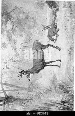 . [Gesammelt Nachdrucke, 1912-1919. Säugetiere; Säugetiere, Vögel. Feb., 1912. Säugetiere von Illinois und Wisconsin - Cory. 61. Bitte beachten Sie, dass diese Bilder sind von der gescannten Seite Bilder, die digital für die Lesbarkeit verbessert haben mögen - Färbung und Aussehen dieser Abbildungen können nicht perfekt dem Original ähneln. extrahiert. Cory, Charles B. (Charles Barney), 1857-1921. , N. n. - Stockfoto