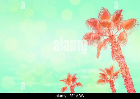 Coral tropischen Palmen am türkisfarbenen Himmel Hintergrund mit Sonne starrt. - Stockfoto