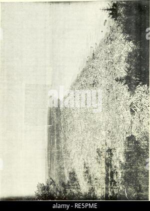 """. Preiselbeeren;: die nationalen cranberry Magazin. Preiselbeeren. /"""" 6. g: St © t 14. Bitte beachten Sie, dass diese Bilder sind von der gescannten Seite Bilder, die digital für die Lesbarkeit verbessert haben mögen - Färbung und Aussehen dieser Abbildungen können nicht perfekt dem Original ähneln. extrahiert. Portland, CT [etc. ]: Taylor Pub. Co [etc. ] - Stockfoto"""