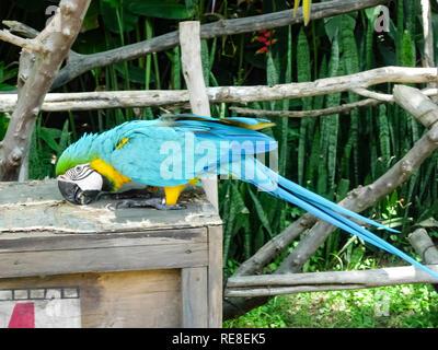 Ein grosser Papagei, einen südlichen tropischen Vogel, ein Papagei, der sprechen kann. - Stockfoto