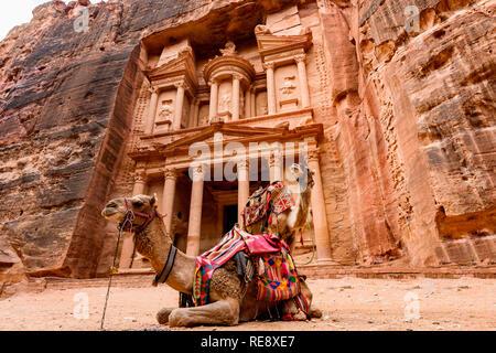 Spektakuläre Aussicht auf zwei schöne Kamele vor Al Khazneh (das Finanzministerium) an Petra. - Stockfoto