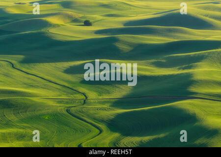 Palouse Weizenfelder von Steptoe Butte, Washington. - Stockfoto