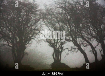 Bäume im Nebel Silhouette gegen einen geringen Sonne auf Bodmin Moor cornwall GROSSBRITANNIEN - Stockfoto