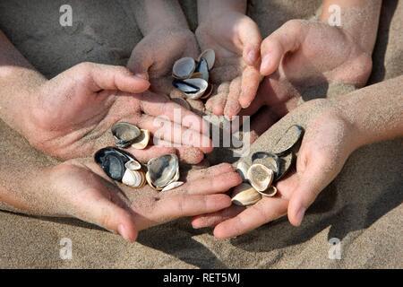 Muscheln in Kinderhand - Stockfoto