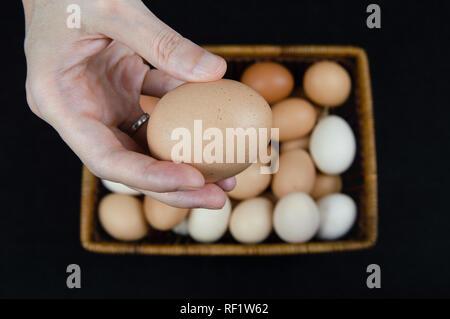 Weibliche Hand, die eine Henne Ei aus einem Korb auf schwarzem Hintergrund - Stockfoto