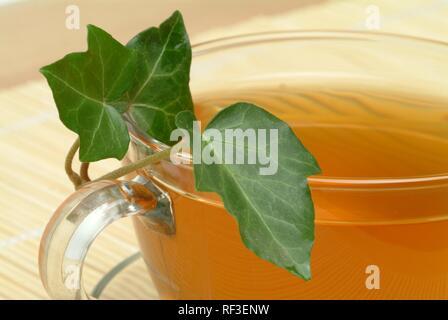 Efeu (Hedera helix), Kräutertee, Arzneimittel, Kaffee