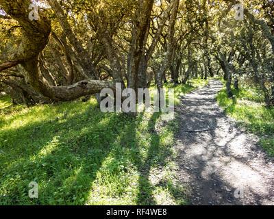 Vordach von lebenden Eichen Abdeckung Weg durch den Wald ziemlich Muster erzeugen - Stockfoto