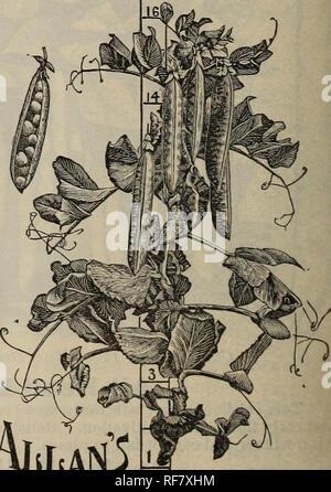 . 1900 Katalog: selbst angebauten Samen. Baumschulen Connecticut Orange Kataloge; Gemüse; Früchte Samen Kataloge Kataloge; landwirtschaftliche Arbeitsgeräte Kataloge. Alle Kopf Früh. mit schönen, großen, sehr dunkel grüne Schoten Preis pro Pck., 10 C.; qt., 25 c: Pk., $ 1,50; bu Fordhook Beizen Gurke. Die neue Sorte ist früh, und es ist auch tinct und wertvoll, dass es weiterhin zu Pro - seine Frucht duce lange nach anderen möglichen herangereift sind und nicht mehr. Die Anbauer die feinsten Gurke für einen Pick-ling Sortieren in Existenz; auch wertvolle als Tabelle Gurke. Preis pro Pck., 5c; Oz, 15. - Stockfoto