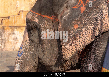 Close up geschmückten Elefanten bei der jährlichen Elephant Festival in Jaipur, Indien - Stockfoto