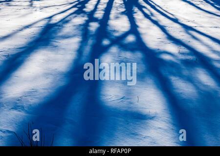 Abstrakte Bäume werfen Schatten auf Neuschnee; Vandaveer Ranch; Salida, Colorado, USA - Stockfoto