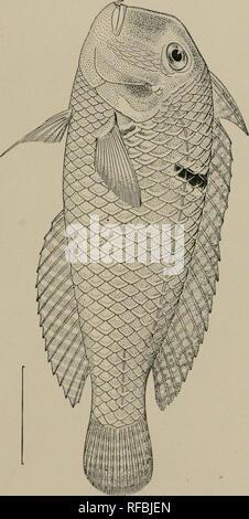 size 40 33a53 adc6b Ein Katalog von den Fischen der Insel Formosa, Taiwan  Auf der Grundlage  der .