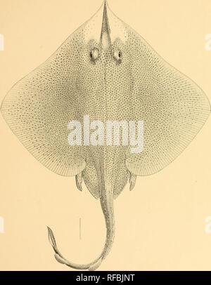 half off f6514 83213 Ein Katalog der Fische von Formosa. Fische. Memoiren Carnegie Museum, Vol, .