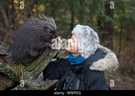 Frau petting einen Unverlierbaren Stachelschwein in der Nähe von haines Alaska - Stockfoto