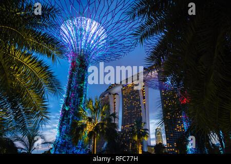 Singapur - Januar 2019: Gärten von der Bucht mit dem Supertree Grove in Singapur in der Nähe von Marina Bay Sands Hotel bei Nacht - Stockfoto
