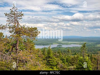 Sommer Wald Blick auf Rukatunturi, fiel und ein Skigebiet in Kuusamo - Finnland. Friedliche immergrüner Baum in der saubere und grüne Natur Landschaft von Fi - Stockfoto