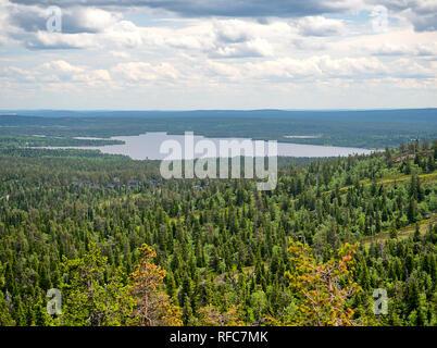 Sommer Wald Blick auf Rukatunturi, fiel und ein Skigebiet in Kuusamo - Finnland. Friedliche immergrünen Bäumen im idyllischen und grünen Natur Landschaft von - Stockfoto