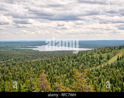 Sommer Wald Blick auf Rukatunturi, fiel und ein Skigebiet in Kuusamo - Finnland. Friedliche immergrüne Bäume in den sauberen und idyllische Natur Landschaft - Stockfoto