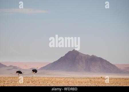 Die jenseitigen Dünen und Wüste Landschaften Namib-Naukluft-Nationalpark machen einen schönen Tagesausflug von Sesriem Camp am Rande der Namib - Stockfoto
