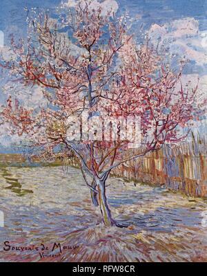 Vincent van Gogh, Souvenir de Mauve (C. 30. März 1888), jpg - Rfw 8 CR - Stockfoto