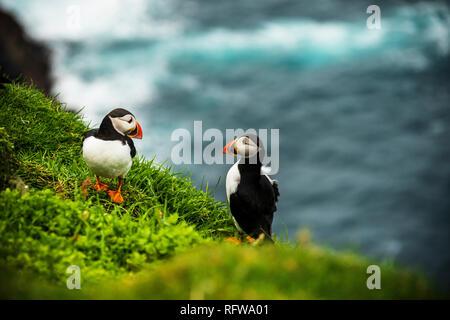 Paar Atlantic Papageientaucher auf Klippe, Mykines Island, Färöer, Dänemark, Europa - Stockfoto