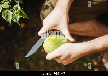 Man Schneiden eine Mango mit Messer, Seychellen - Stockfoto