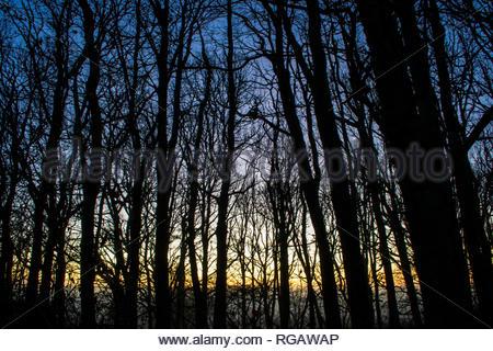 Silhouetten der schwarze Bäume in den dunklen Wäldern am frühen Morgen. Sonnenaufgang und Nebel auf dem Feld hinter dem Wald. Magisches Licht. - Stockfoto