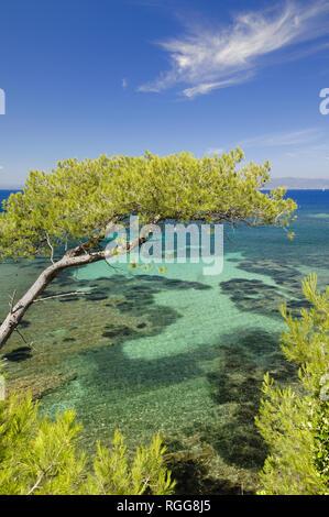 Türkisblaue Wasser & Untiefen entlang der Mittelmeerküste mit Pine Tree Port-Cros Nationalpark, Îles d'Hyères, Côte d'Azur Provence Frankreich - Stockfoto