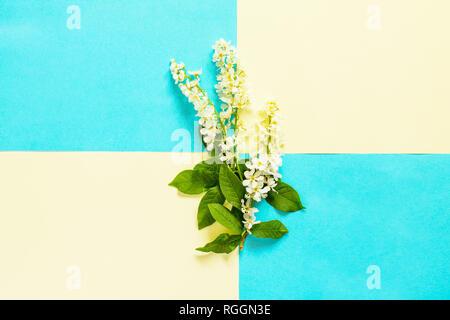 Frühling Blumen Vogel Kirschbäume auf blauem und gelbem Hintergrund. Minimale Ostern Konzept. Ansicht von oben flach Hintergrund. - Stockfoto