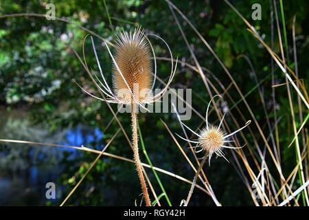 Makro detaillierte Ansicht von Blumen, Bäumen und Unkraut Flora entlang des Jordan River Trail in der Wasatch Front Rocky Mountains, in Salt Lake City, Utah. - Stockfoto