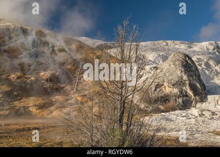 Eine dampfende Hügel von Gold und weißen Terrassen von einem Baum und Stein in Mammoth Hot Springs, Yellowstone National Park getrennt - Stockfoto