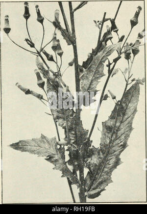 Bulletin Die Landwirtschaft Pflanzen Einrichtung Medizinische