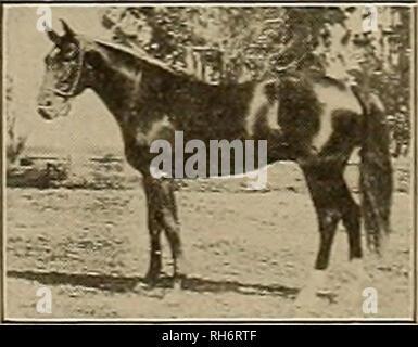 Züchter Und Sportler Pferde Licht Lange Welle Schnell Den