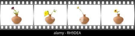 Blühende Blumen auf weißem Hintergrund im Rahmen isoliert in Form von Film. - Stockfoto