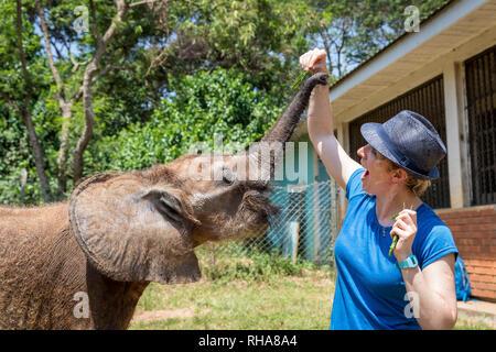 Frau mit Fedora Fütterung Elefant Kalb in Uganda Wildlife Education Center, Entebbe, Uganda - Stockfoto