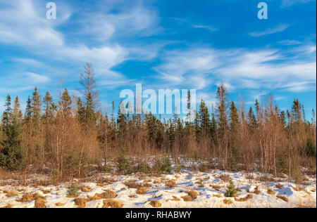 Sax-Zim Bog im nördlichen Minnesota. - Stockfoto