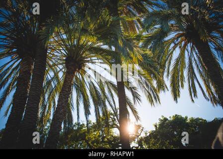 Schönen Tag in Ciutadella Park, Barcelona, Blick auf die grüne Palmen - Stockfoto